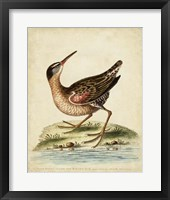 Antique Bird Menagerie IV Framed Print