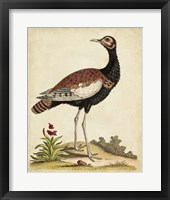 Antique Bird Menagerie IX Framed Print