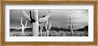 Framed Arizona, Organ Pipe National Monument