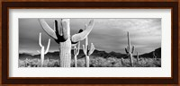 Framed Arizona, Organ Pipe National Monument