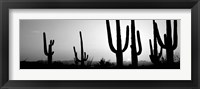 Framed Silhouette of Saguaro cacti, Saguaro National Park, Tucson, Arizona