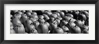 Framed Pumpkins in a field, Vermont