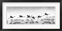 Framed Flamingos landing, Kenya BW