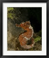 Framed Orange seahorse, West Palm Beach, Florida