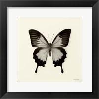 Butterfly III Framed Print