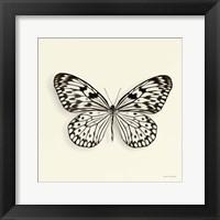 Framed Butterfly V
