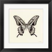 Framed Butterfly VI