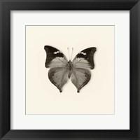 Butterfly VII Framed Print