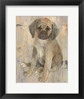 Paco Framed Print