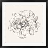 Framed Pen and Ink Florals IV