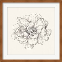 Framed Pen and Ink Florals IV