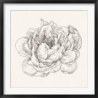 Framed Pen and Ink Florals V