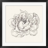 Framed Pen and Ink Florals V