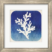 Framed Watermark Coral