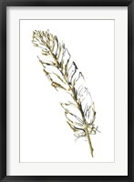 Gilded Turkey Feather II Framed Print