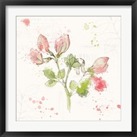 Floral Splash II Framed Print
