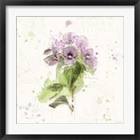 Floral Splash III Framed Print