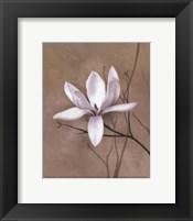 Framed Delicate Beauty II