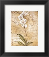 Framed Calligraphy Orchid