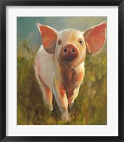 Framed Morning Pig