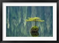Framed Fairy Lake Bonsai