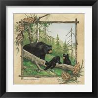Framed Black Bear & Cubs