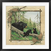 Framed Black Bear & Cubs