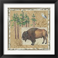 Buffalo Framed Print