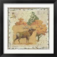 Elk Country Framed Print