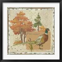 Framed Pheasant Postcard
