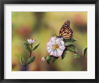 Framed Monarch With Camellia