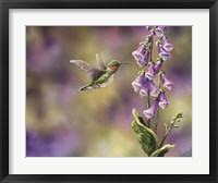 Framed Spring Hummingbird