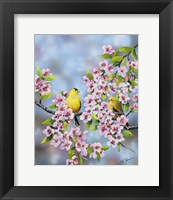 Framed Finches In Cherry Tree