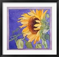 Framed Sunflower I
