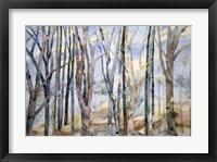 Framed Through The Trees