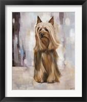 Framed Silky Terrier I
