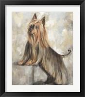 Framed Silky Terrier II