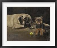 Framed Yorky and Mastif