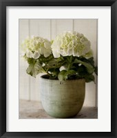 Framed Potted Hydrangea
