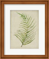 Framed Fern 1