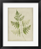 Framed Fern 4
