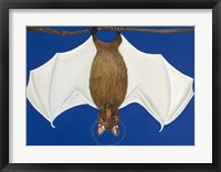 Framed Bat