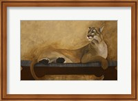 Framed She's a Cougar