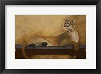 Framed She's a Cougar