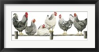 Framed Hens, White Background