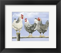 Framed Three Black & White Hens