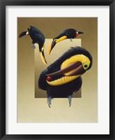 Framed Chestnut-Mandibled Toucans