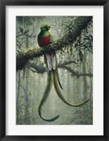 Framed Resplendent Quetzal 2