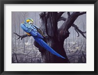 Framed Blue And Yellow Macaw In Burned Forest