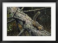 Framed Eastern Chipmunk